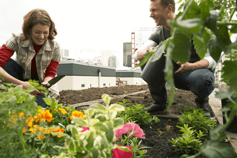 Roof Vegetable Garden Construction Ideas Review In 2018 Complete Guide