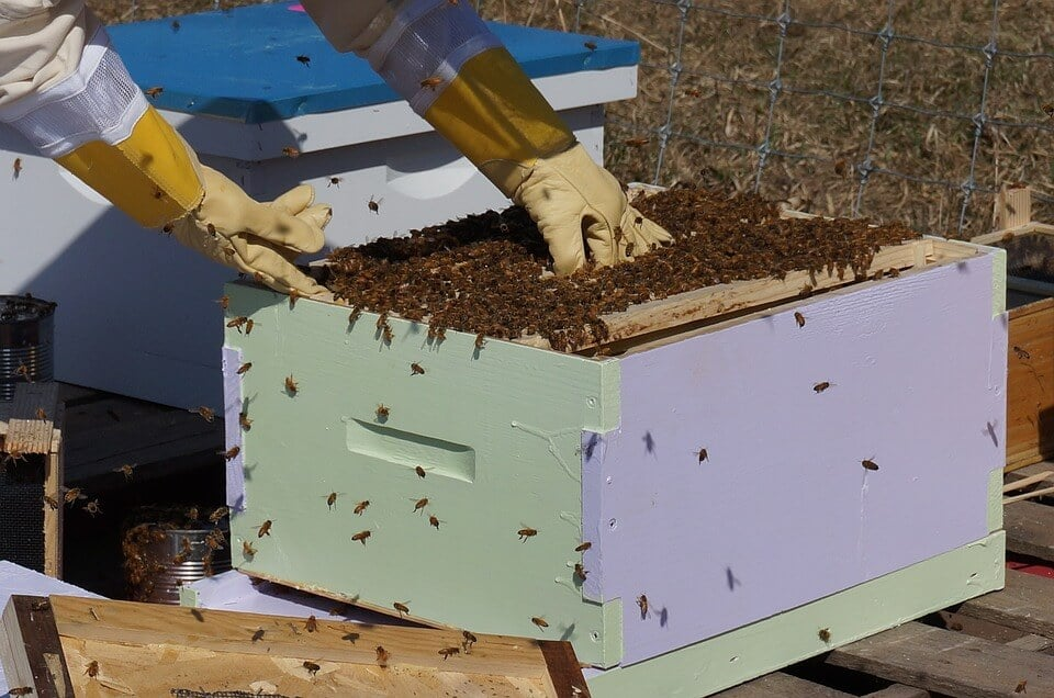Techniques To Improve Bee cultivation